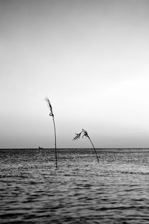 Sunset on the sea, with two reeds in the water. Space for copy.