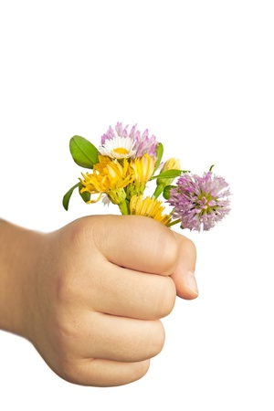 Child hand holding flowers isolated on white. Useful as spring or mothers day greeting card. Clipping path included. Stock Photo