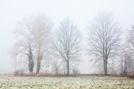 Group of trees in a foggy winter day  Melancholy, sadness concept  Stock Photo