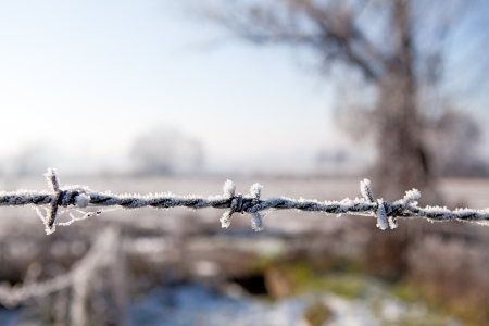 Close up on barbed wire with countryside on the background  Freedom, protection and also prison, danger concept