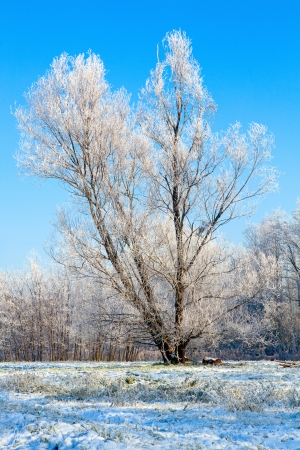 Winter landscape with a lonely tree covered with snow  Stock Photo