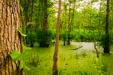 mossy: Mossy Pond