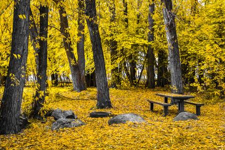 Campground at Autumn