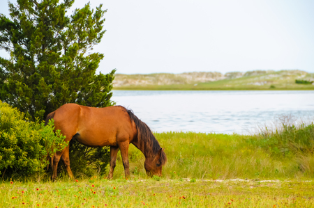 Grazing horse by the water