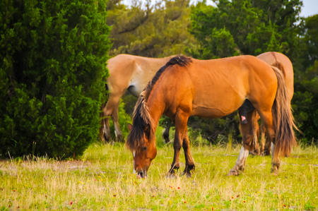 Horses grazing in the grass