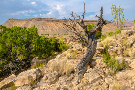 A tree at the Black Dragon Canyon during the hot summer