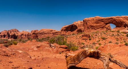 moab: A fallen tree in front of arch