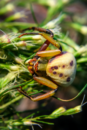 A close up of a crab spider