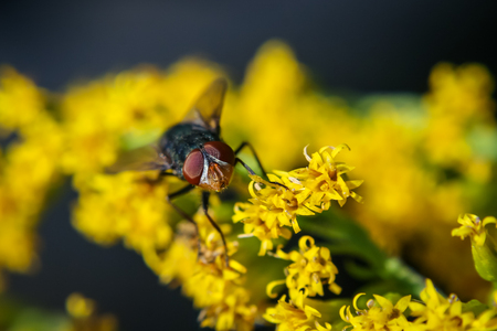 A fly on some flowers Stock Photo
