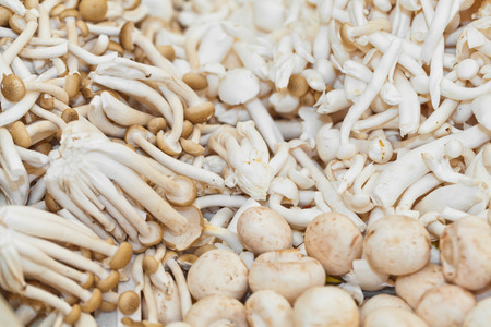 beech mushrooms both brown and white varieties on market for sale Imagens