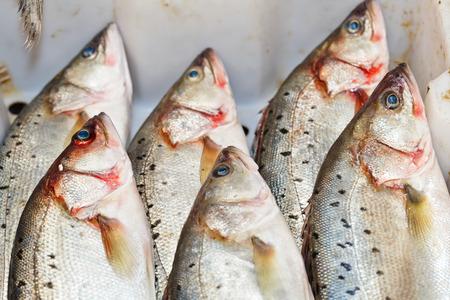 perca: perch  Perca fluviatilis  in the market for sale Stock Photo