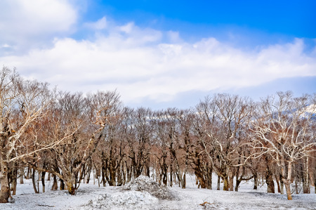 Winter landscape of frosty trees, white snow with blue sky white cloud Imagens