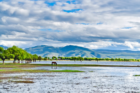 Horse roaming free at Pudacuo National Park at Shangri-la, Yunnan China