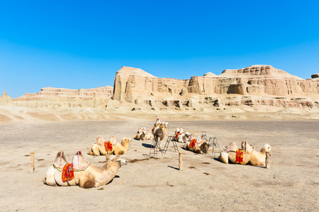 landforms: Camels resting at Yardang landforms-- Urho Ghost Castle in Karamay City, Xinjiang, China