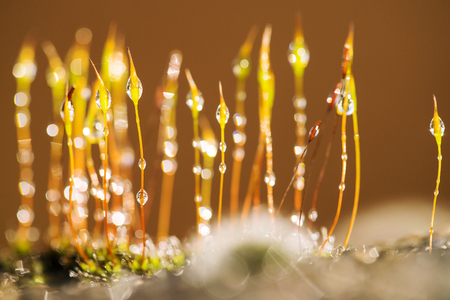 Moss in the morning dew Stock fotó