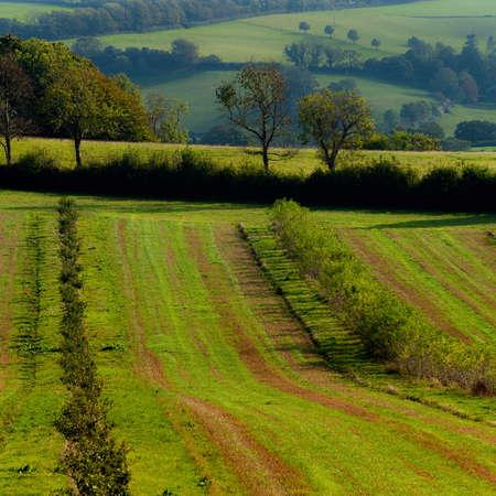 Fields of Berry Pomeroy Village in Devon in England in Europe 写真素材