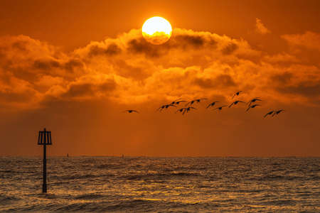 Geese in flight on a background of the rising sun on the beach at Dawlish Warren in Devon in England in Europe.