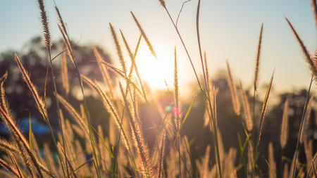 flowers grass in the sunset Stock Photo