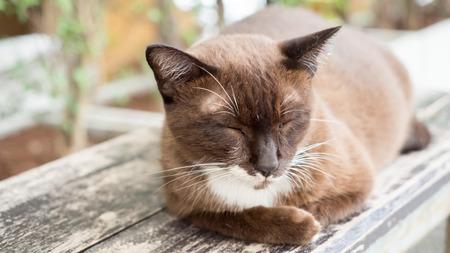 Cats sleep sitting on wooden balconies