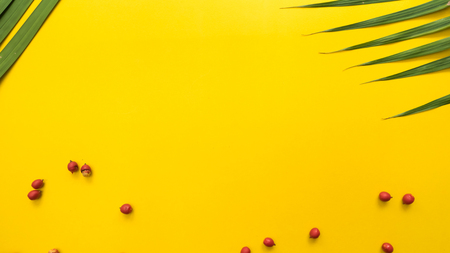 Leaves nature and red Fruit of the palm copy space yellow background
