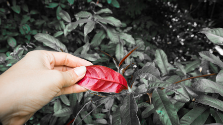 A man's hand touches leaves in nature Selective Color
