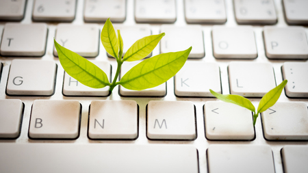 Leaves nature and keyboard.Small green plant growing from white computer keyboard.Technology with nature concept