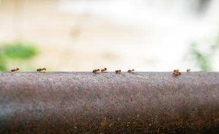 ant way close up Foto de archivo - 109211477