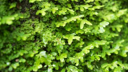 close up nature Reklamní fotografie - 123159067