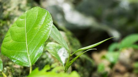 close up nature Reklamní fotografie - 123159198