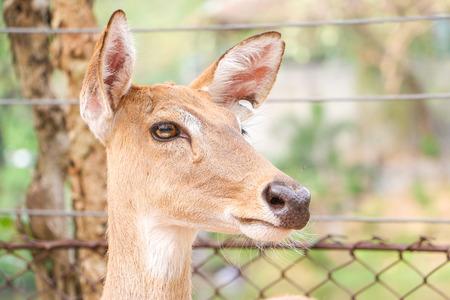 close up deer nature background