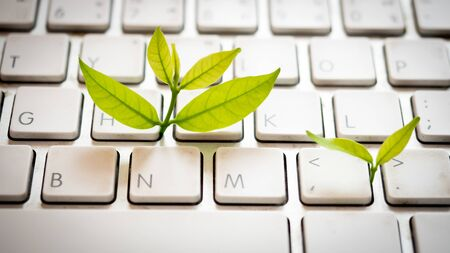 Leaves nature and keyboard. Small green plant growing from white computer keyboard. Technology with nature concept