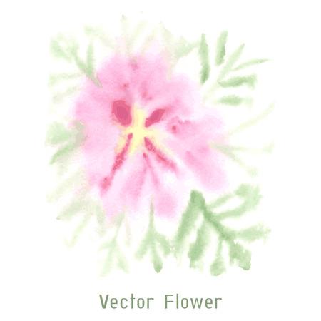 transparently: Gentle pink watercolor flower Illustration