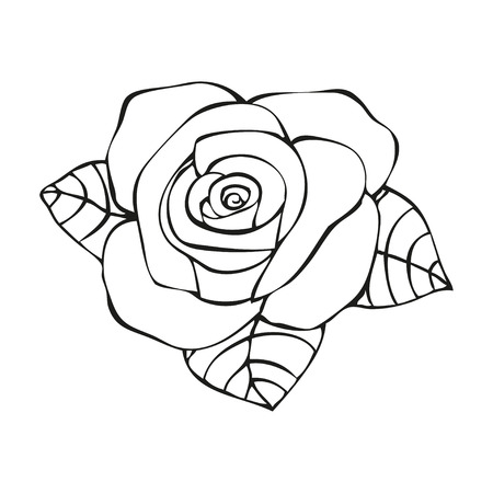 flower close up: Rose in tattoo style