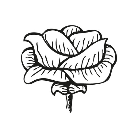 rose tattoo: Rose in tattoo style, hand drawn flower