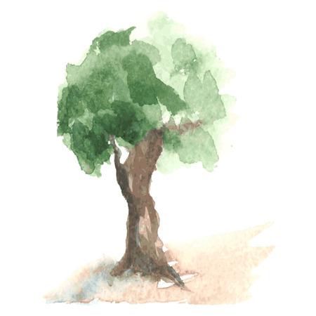 maldestro: Vecchio albero acquerello con fogliame verde che starnazza su un vento su goffo tronco marrone, albero rurale come melo, schizzo disegnato da acquerello Vettoriali