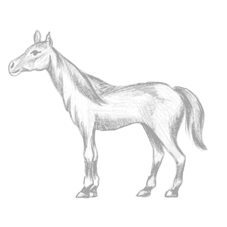 mane: Hand drawn horse, pencil drawing of mare with long mane and tail, vector illustration