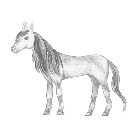 mane: Hand drawn horse, pencil drawing of mare with long mane and tail Illustration