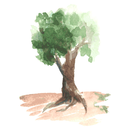appletree: Romantic watercolor tree with green foliage on clumsy brown trunk, rural tree like apple-tree, sketch drawn by watercolour Illustration