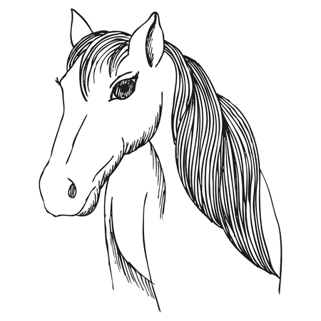 mane: Hand drawn horse with long mane and bang, vector sketch of mare