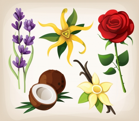 flor de vainilla: Una colecci�n de flores de vectores de colores aislados