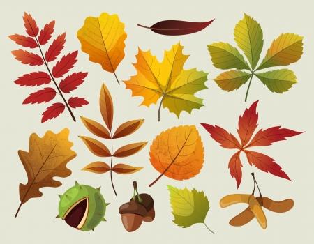 A collection of colorful autumn leaf designes   Ilustracja