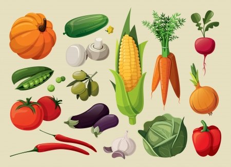 green cabbage: A set of delicious vegetables.  Illustration