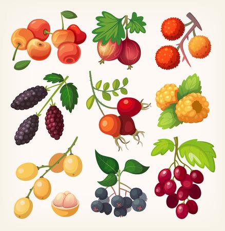 달콤한 다채로운 베리 라벨 디자인에 대 한 설정. 요리 책이나 그림 메뉴. 일러스트