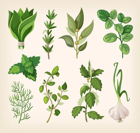 salatdressing: Gr�ne duftenden Gew�rzen und Dressing Kr�uter f�r Suppe, Salat, Fleisch und andere Speisen. Illustration