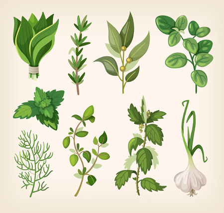 green herbs: Green fragrant seasoning and dressing herbs for soup, salad, meat and other dishes.