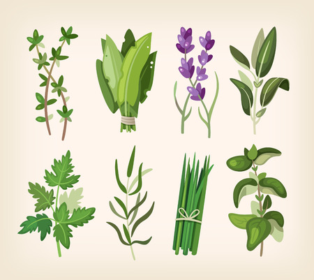 kitchen illustration: Green fragrant seasoning and dressing herbs for soup, salad, meat and other dishes.