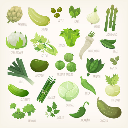 Variety of green and white common farm and exotic fruit and vegetables. List of plants from grocery store with their market names Isolated vector icons. Stock Illustratie