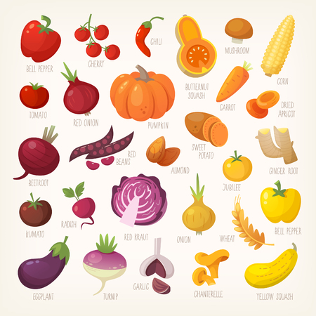 Variety of yellow, red and purple common farm and exotic fruit and vegetables. List of plants from grocery store with their market names. Isolated vector icons. 일러스트