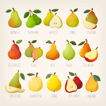 Big variety of pears with names. Isolated vector images.