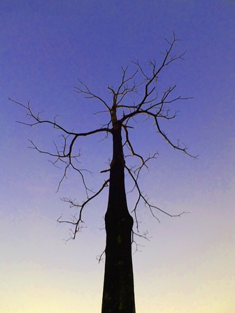 alone tree silhouette Stock Photo - 12134621